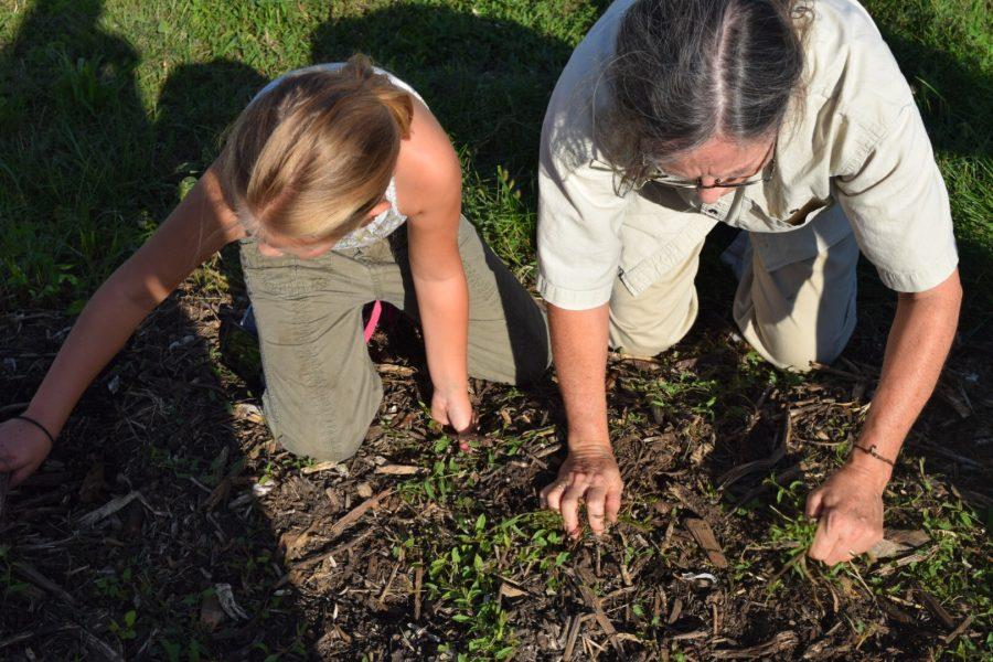 Active garden changes landscape of West Bloomington