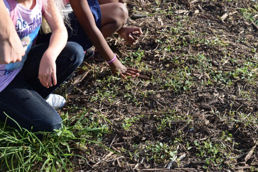 The children from the Boys and Girls Club learn how to plant seeds.