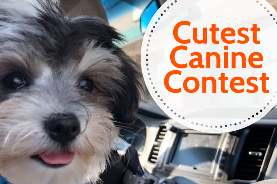 The Inkspot's Cutest Canine Contest